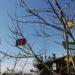 arbre à message